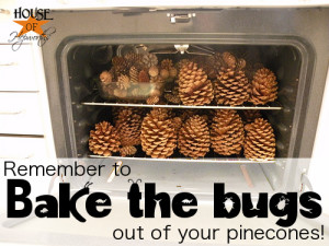 Christmas… in May? (Bake the bugs out of your pinecones!)