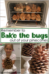 Bake the bugs out of your pinecones!