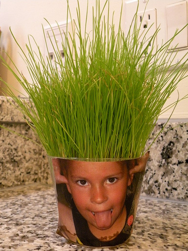 Another use for Wheatgrass… Silly face grass hair